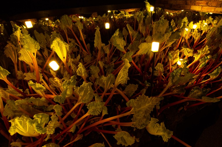02457_rhubarb_festival