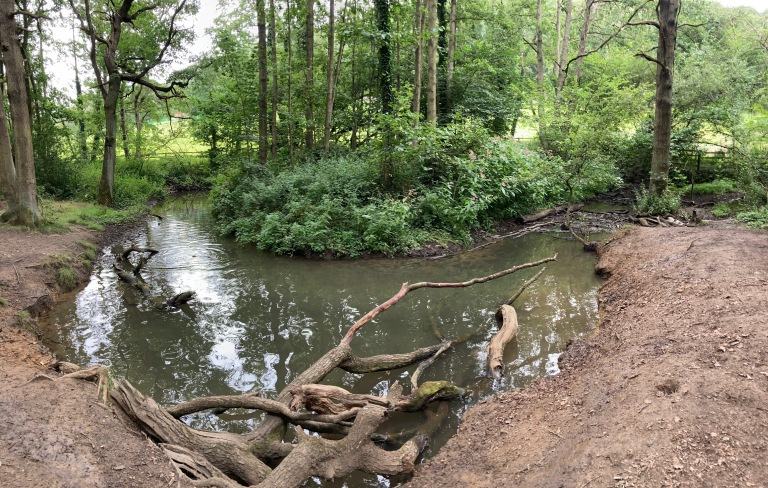Coxley Woods 15th August