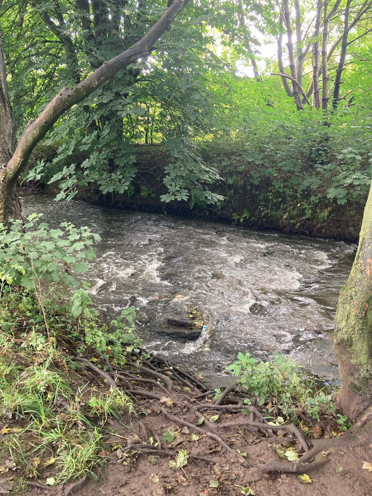 River Dearne 18th August